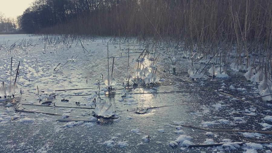 Jezioro Sasiny
